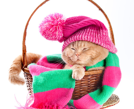 warm things: Cat wearing a pink knitting hat with pompom and a scarf sleeping in a basket Stock Photo