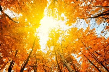 Sun shining in the sky among treetops in an autumn park photo