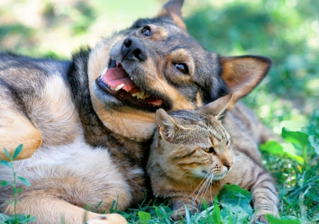 cat walk: Dog and cat playing together outdoor Stock Photo