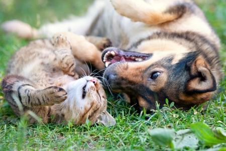 犬と猫一緒に遊んで屋外 写真素材