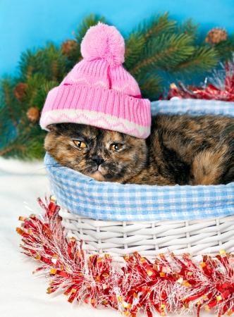 pompom: Gatto che porta cappello rosa maglia con pompon in un cesto a Natale