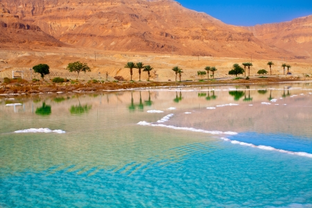 Dead Sea seashore with palm trees and mountains photo