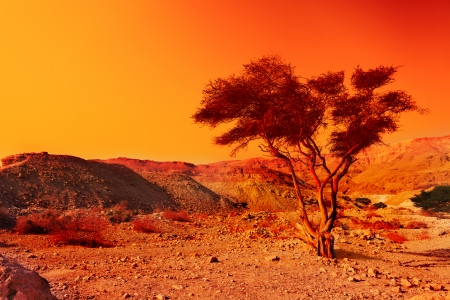 nature reserves of israel: Alone tree in Judean Dessert at sunset Stock Photo