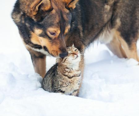 gato jugando: Perro y gato que juegan junto al aire libre en la nieve Foto de archivo