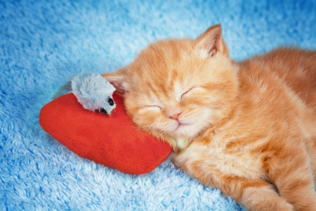 4 Lunch Servietten Kleines Kätzchen mit Weihnachtsmütze schlafend auf Decke