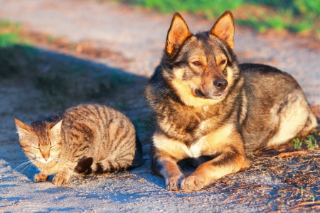 Dog and cat relaxing together outdoor at sunset photo