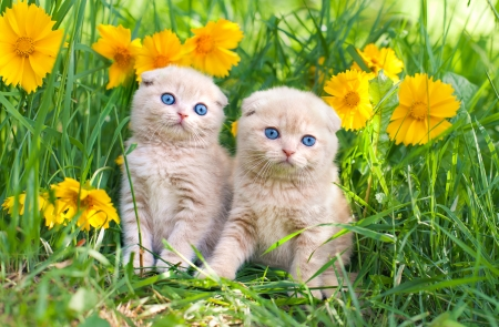 Cute little kittens sitting in flower meadow photo