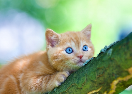 Kitten sneaking on the tree photo