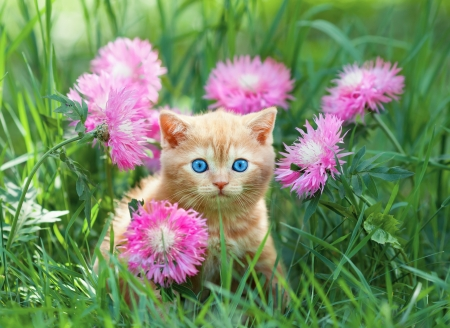 Cute little kitten sitting in flower meadow photo
