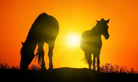 Horse silhouettes at orange sunset photo
