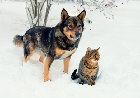 Cat and big dog playing in the snow Фото со стока