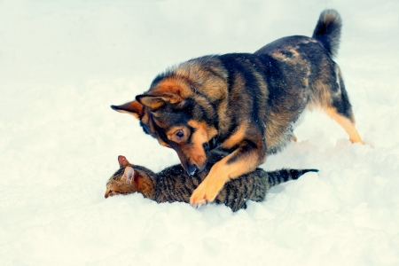 Cat and big dog playing in the snow photo