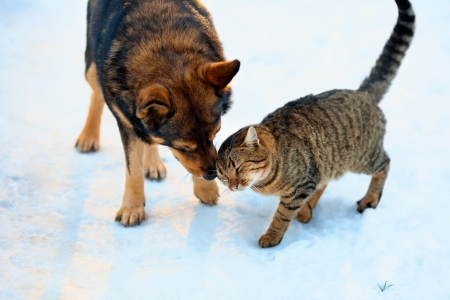 Cat and big dog playing in the snow Stock Photo