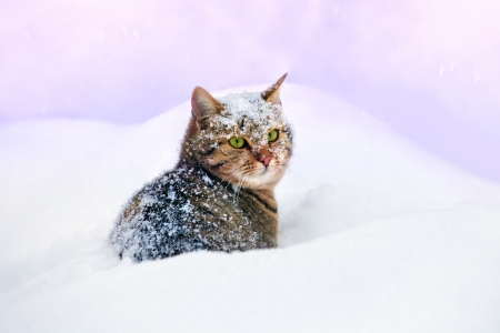 Cat cowered wit snowflakes, sitting in the deep snow Фото со стока