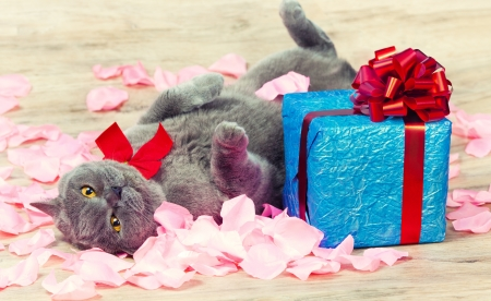 A cat lying on the back on rose petals near a blue gift with a red ribbon with big bow photo
