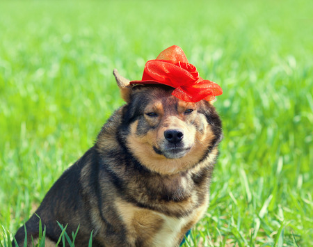 tendencies: Dog wearing female red hat relaxing outdoors