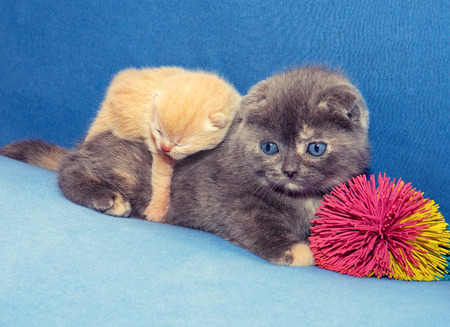 Two cute little kittens photo