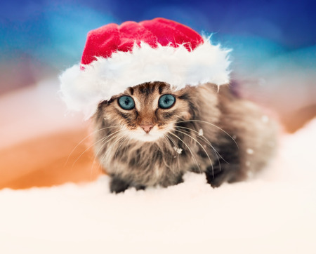 Little kitten wearing Santa s hat outdoors photo