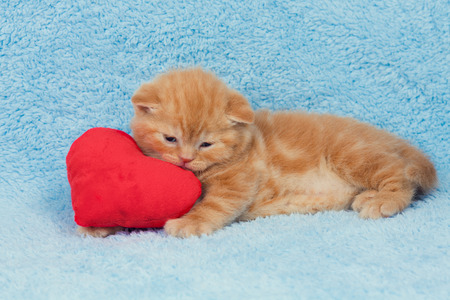 Little kitten sleeping on the red heart-shaped pillow photo