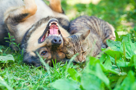 Dog and cat playing together outdoor Stock Photo