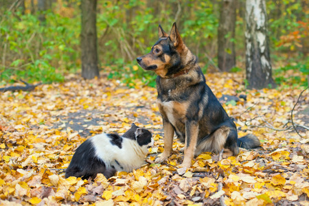 Dog and cat playing together outdoor in autumn photo