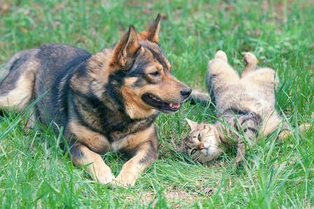 Chien et chat jouant Cat ensemble en plein air couché sur le dos Banque d'images