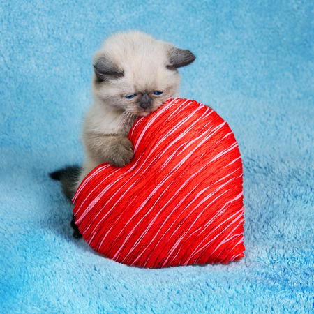 Little kitten holding red heart photo
