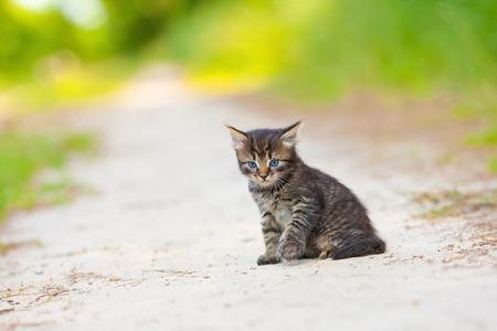 Little kitten sitting on the sandy road Stock Photo