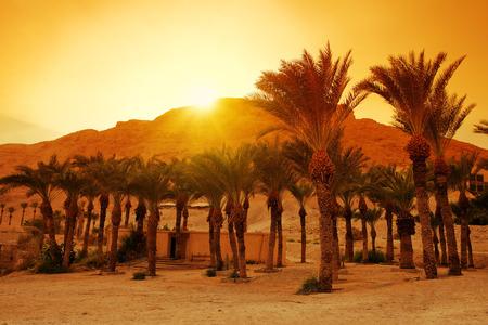 masada: Date palms near Masada fortress in Israel Stock Photo