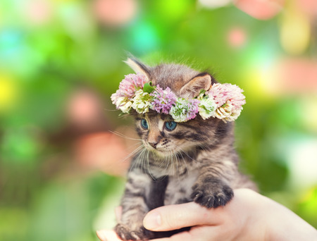 Portrait of cute kitten crowned with a chaplet of clover