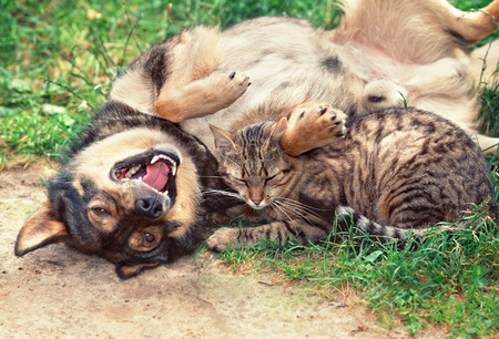 Dog and cat playing outdoor photo