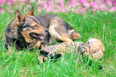 Cat and dog have a rest on the grass Stok Fotoğraf
