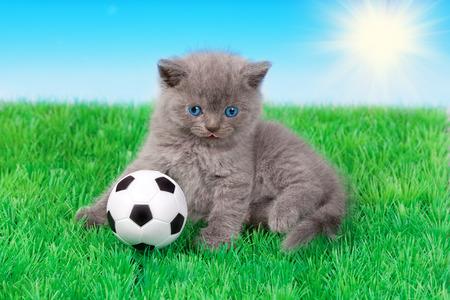 Cute little kitten playing soccer photo
