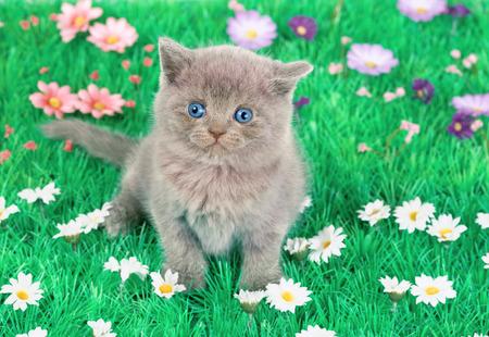 Cute little kitten sitting in floral lawn photo