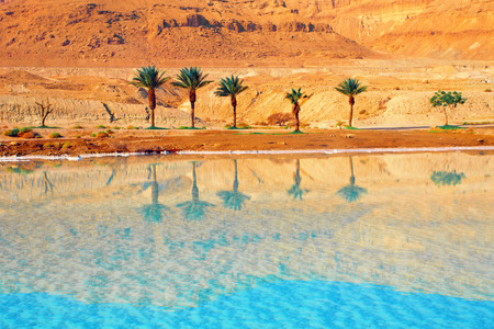 Dead Sea seashore with palm trees and mountains on background photo