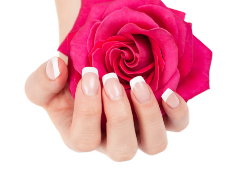Beautiful woman s hand with perfect french manicure holding pink rose on white background