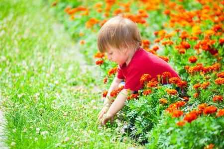 Cute little boy playing in flowers photo