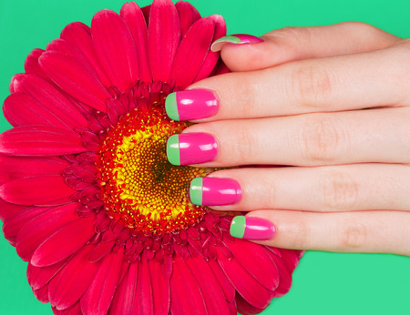 bi: Beautiful woman s hand with french bi color manicure on gerbera flower Stock Photo