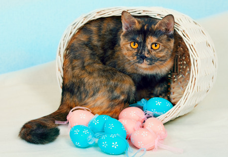 Cat in a basket with colorful eggs photo