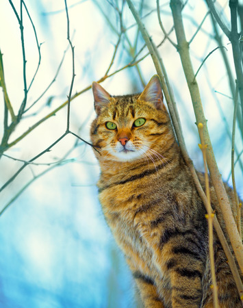 Cat sitting in the forest photo