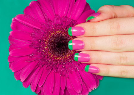 bi: Beautiful womans hand with french bi color manicure on gerbera flower