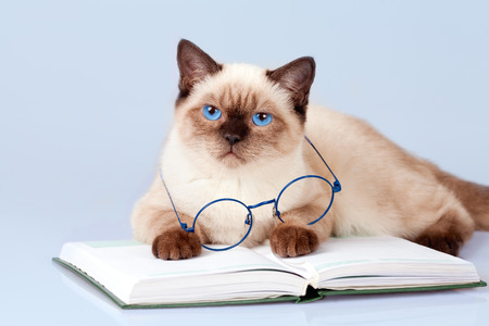Cute business cat is wearing glasses reading notebook photo