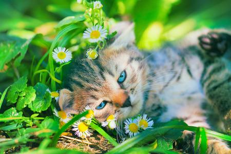 Cute kitten rest on the grass photo