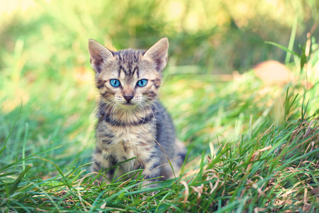 Little kitten staying in a grass Stock Photo