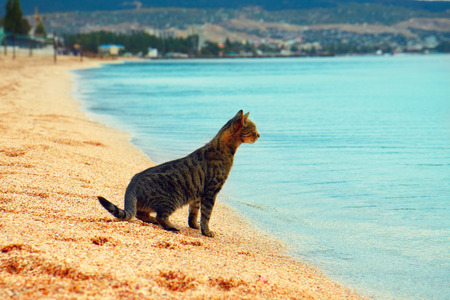 Cat sitting on the beach and looking on the sea