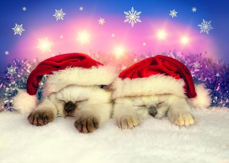 Little cats wearing Santa hats photo