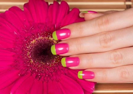 bi: Beautiful female hand with french bi color manicure on gerbera flower Stock Photo