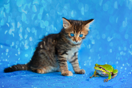 tiny frog: Little kitten and frog sitting in the rain