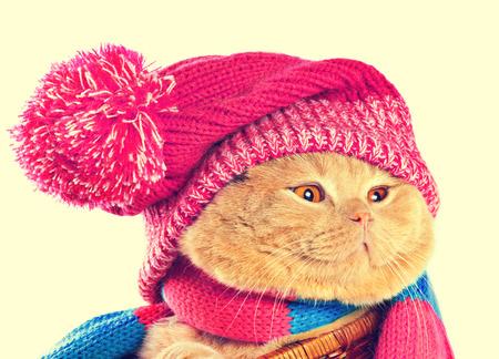 pompom: Gatto che porta un cappello di lavoro a maglia rosa con pompon e una sciarpa. Correzione del colore Vintage. Archivio Fotografico
