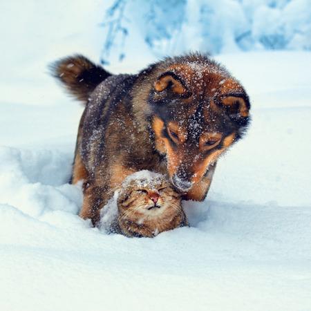 犬が雪の中で子猫と遊んで 写真素材